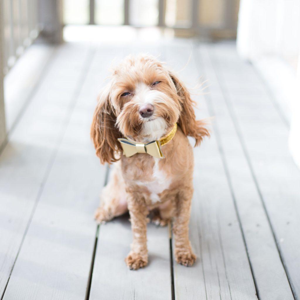 Custom Deck with family dog